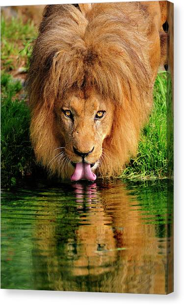 Christmas Lion Canvas Print