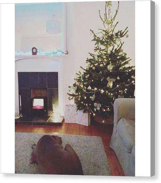 Weimaraners Canvas Print - Christmas Tree Decorated By Me! by Hollie Wemyss