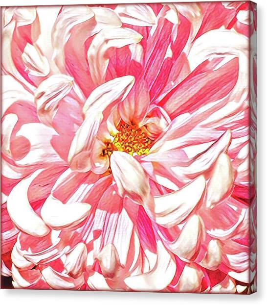 Close-up Canvas Print - Chrysanthemum In Pink by Shadia Derbyshire