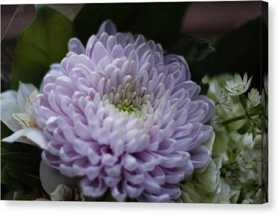 Canvas Print - Chrysanthemum by Jo Jackson