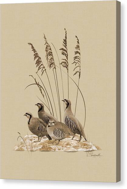 Chukar Partridges Canvas Print