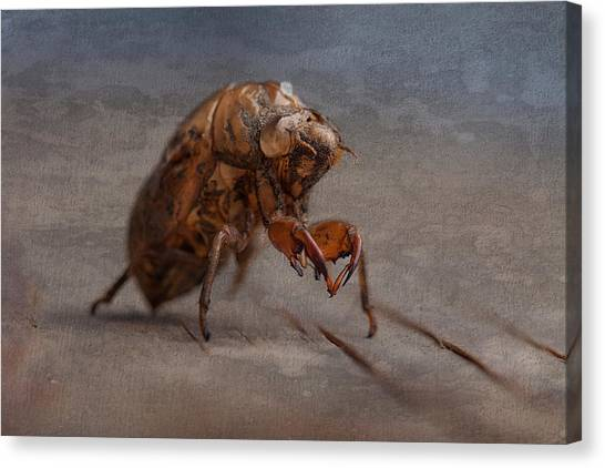 Bug Canvas Print - Cicada Shell by Tom Mc Nemar