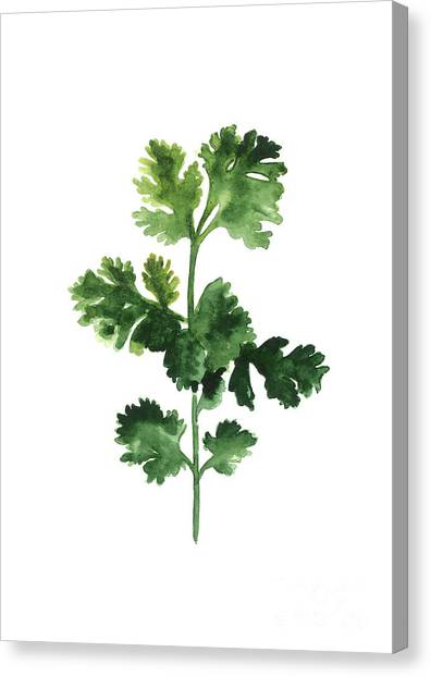 Birthday Canvas Print - Cilantro Watercolor Art Print Painting by Joanna Szmerdt
