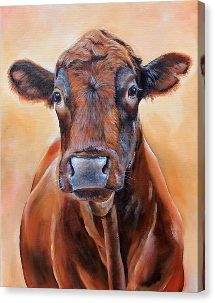 Angus Steer Canvas Print - Cinnabar    by Laura Carey