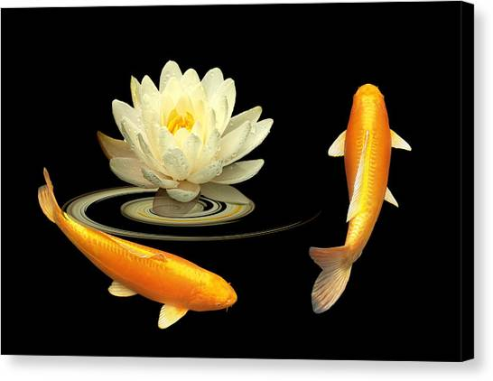 Circle Of Life - Koi Carp With Water Lily Canvas Print