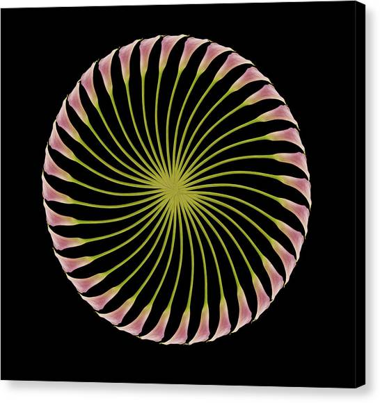 Circle Of Lily Canvas Print by Jon Daly