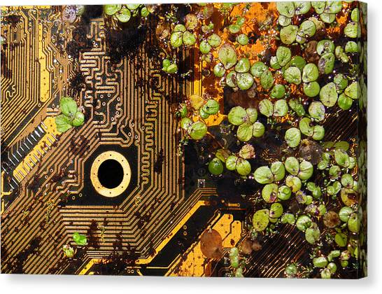 Circuit Sprouts Canvas Print