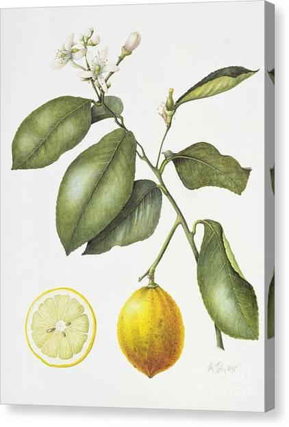 Half Life Canvas Print - Citrus Bergamot by Margaret Ann Eden
