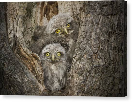 Small Birds Canvas Print - Civ And Civ by Alberto Ghizzi Panizza
