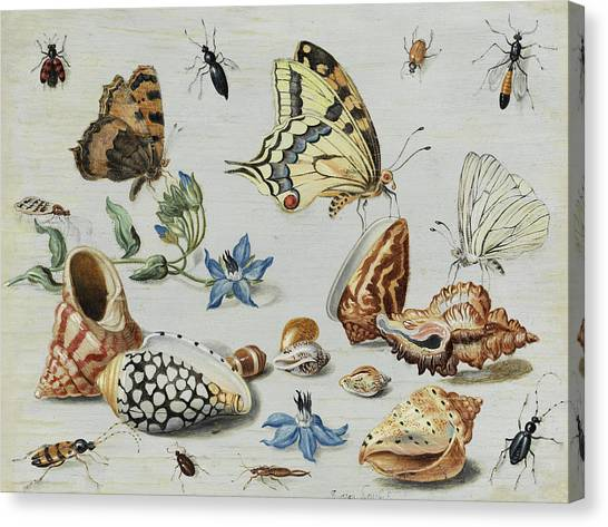 Clams Canvas Print -  Clams, Butterflies, Flowers And Insects by Jan van Kessel