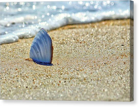 Clamshell In The Waves On Assateague Island Canvas Print