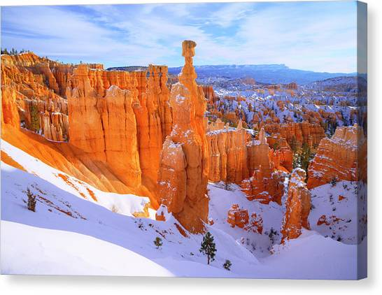 Pine Trees Canvas Print - Classic Bryce by Chad Dutson