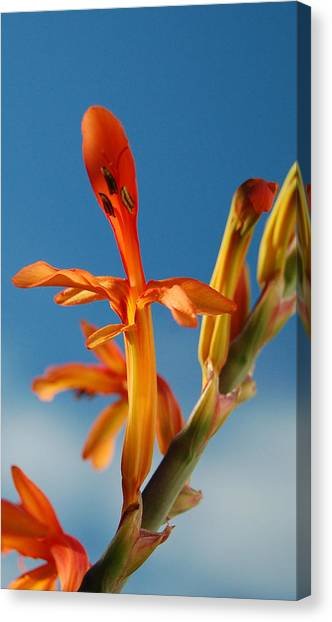 Clear Orange Canvas Print by Jean Booth