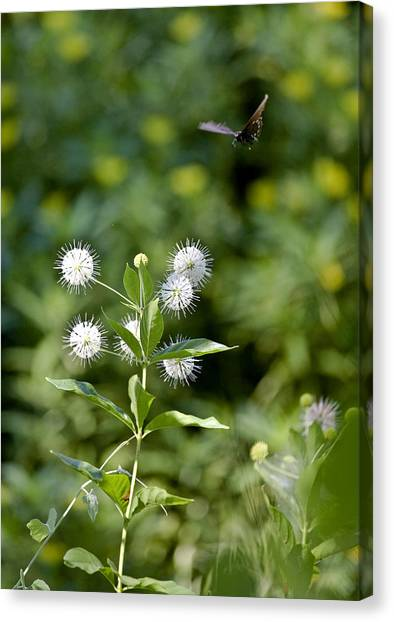 Cleared For Landing Canvas Print by Charlie Osborn