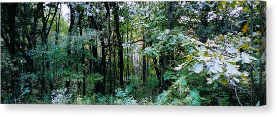 Clearing Glimpsed 1 Canvas Print by Tom Hefko