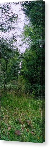 Clearing Glimpsed 7 Canvas Print by Tom Hefko