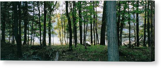 Clearing Glimpsed 9 Canvas Print by Tom Hefko