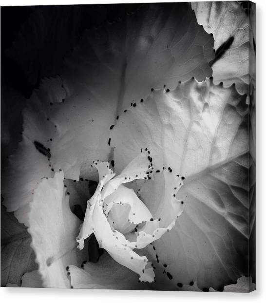 Clearly Bloomed Canvas Print