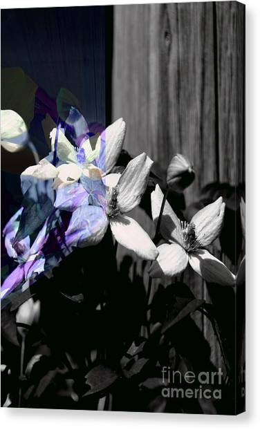 Clematis 2 Shades Of Grey Canvas Print