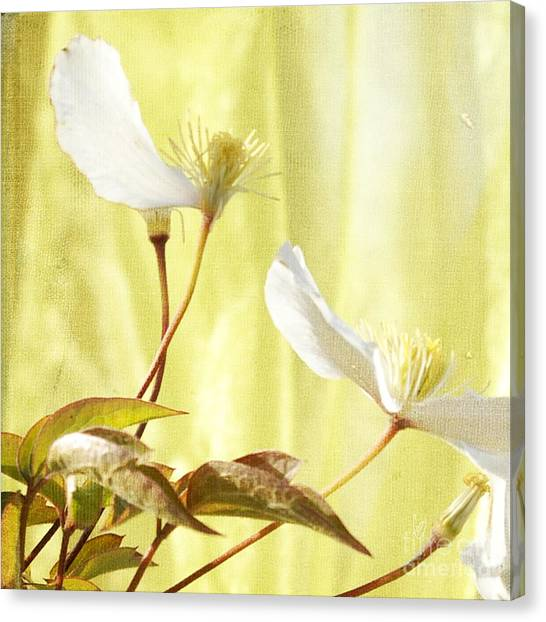 Clematis And Sunshine Canvas Print