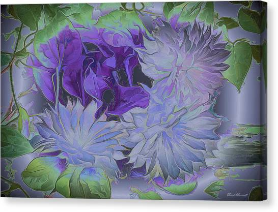Clematis Canvas Print by Frank Maxwell