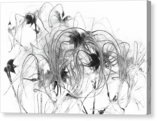Clematis Seeds Canvas Print