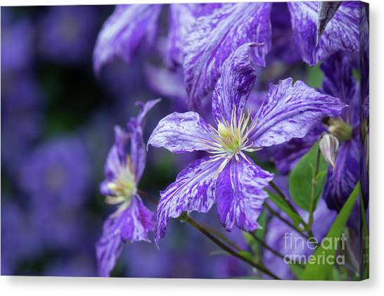 Tie-dye Canvas Print - Clematis Tie Dye by Tim Gainey