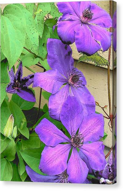 Clematis Trail Canvas Print by Vijay Sharon Govender