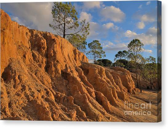 Vegetation Canvas Print - Cliffs And Pine Trees Near Sunset In Ludo by Angelo DeVal