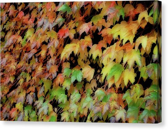 Climbing Color Canvas Print by JAMART Photography