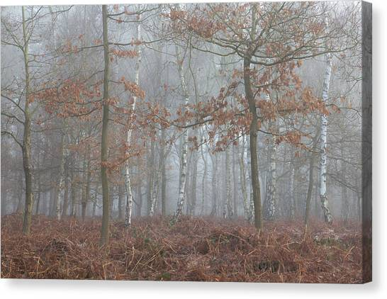 Sherwood Forest Canvas Print - Clinging On by Chris Dale