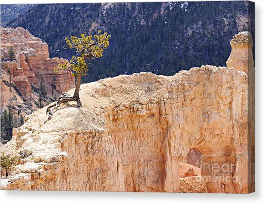 Clinging To The Top Of The Wall Canvas Print