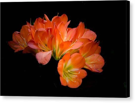 Clivia Flora Canvas Print