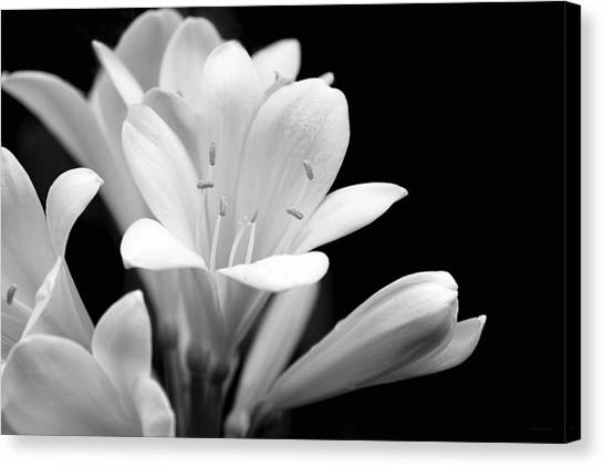 Clivia Flowers Black And White Canvas Print