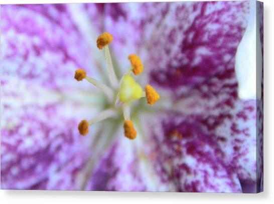 Close Up Flower Canvas Print