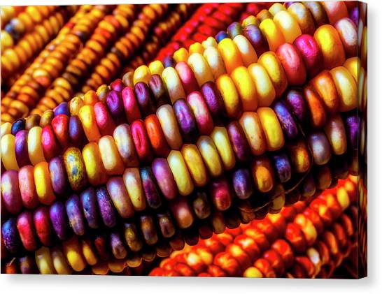 Indian Corn Canvas Print - Close Up Indian Corn by Garry Gay