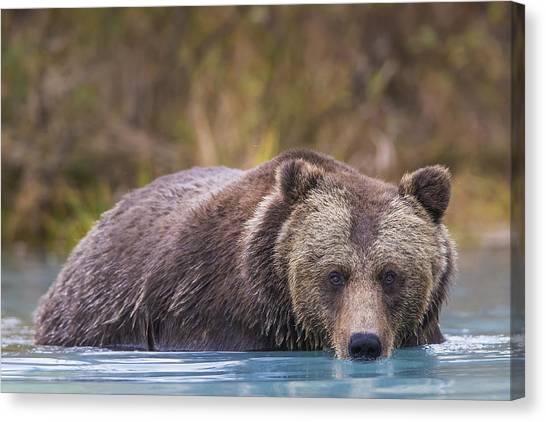 Bears Canvas Print - Close Up Of A Coastal Brown Bear  Ursus by Rob Daugherty