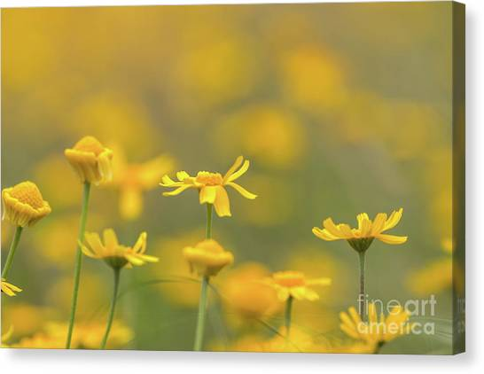 Close Up Of Yellow Flower With Blur Background Canvas Print