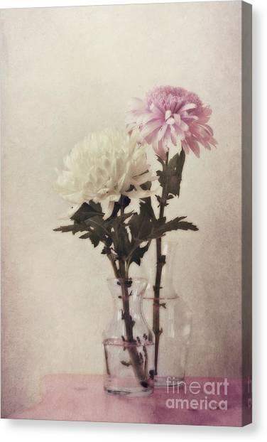 Chrysanthemum Canvas Print - Closely by Priska Wettstein