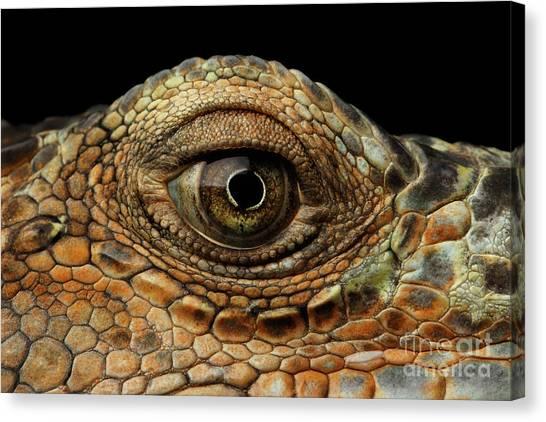 Reptiles Canvas Print - Closeup Eye Of Green Iguana, Looks Like A Dragon by Sergey Taran