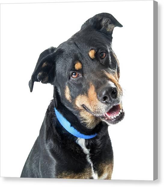 Rottweilers Canvas Print - Closeup Happy Big Dog Crossbreed by Susan Schmitz