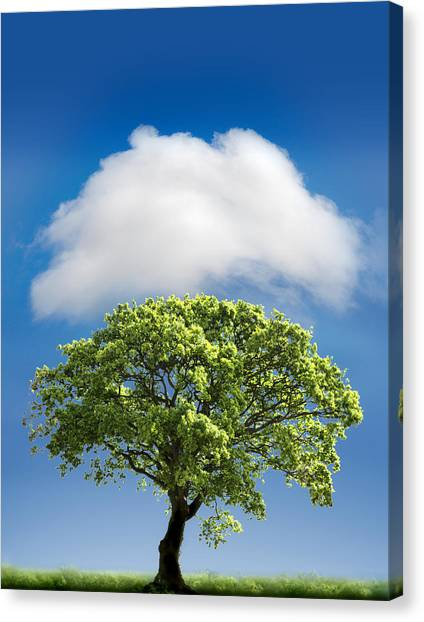 Blue Sky Canvas Print - Cloud Cover by Mal Bray