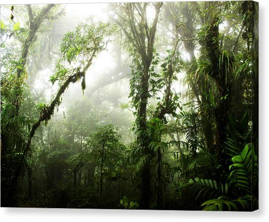 Cloud Forests Canvas Print - Cloud Forest by Nicklas Gustafsson
