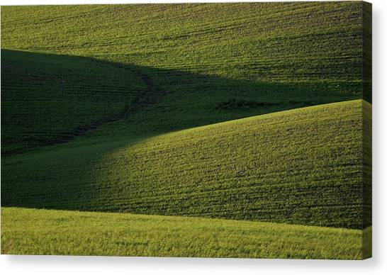 Rolling Hills Canvas Print - Cloud Shadows On New Growing Crop by Mark Duffy