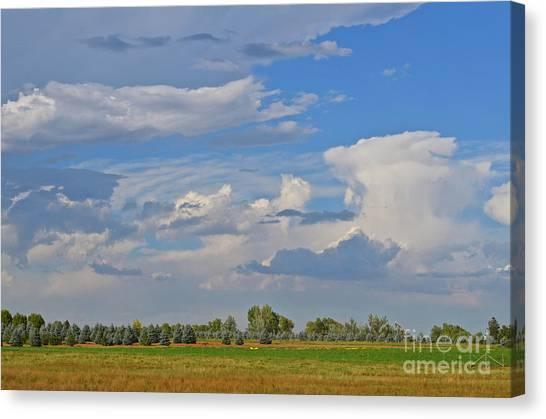 Clouds Aboive The Tree Farm Canvas Print