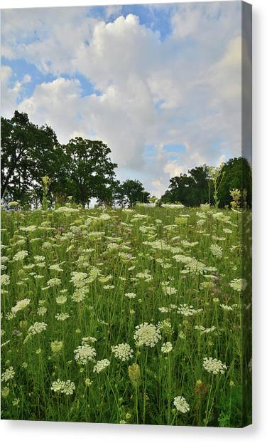 Prairie Sunrises Canvas Print - Clouds And Queen Anne's Lace by Ray Mathis