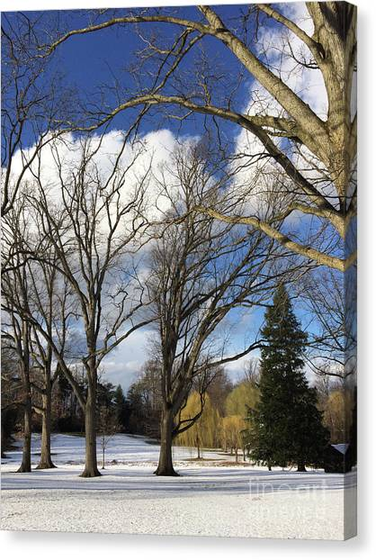 Haverford Canvas Print - Clouds For Leaves Snow For Grass by Clay Cofer