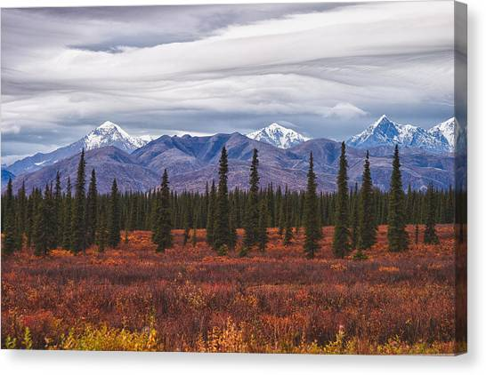 Wild Berries Canvas Print - Clouds Of Denali National Park by Jeff Folger