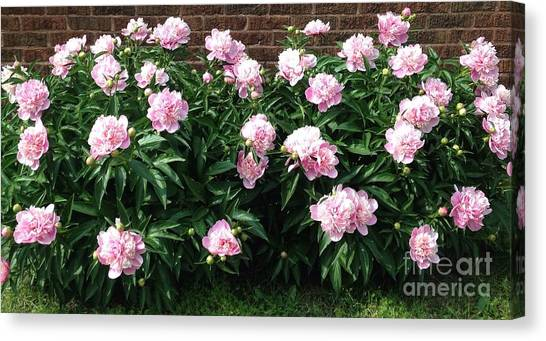 Clouds Of Peony Canvas Print