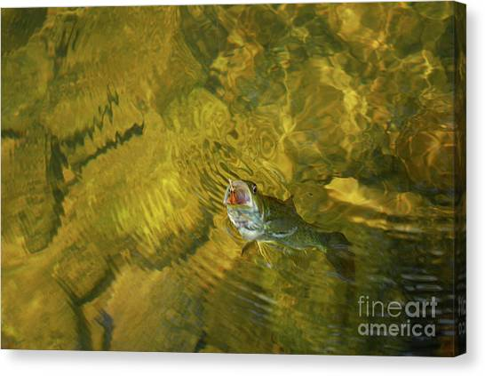 Clouser Smallmouth Canvas Print